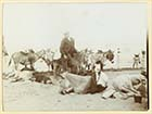 Marine Terrace sands donkeys ca 1900[Photo]